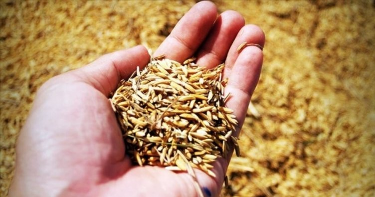 5 bin çiftçiye sertifikalı tohum dağıtıldı