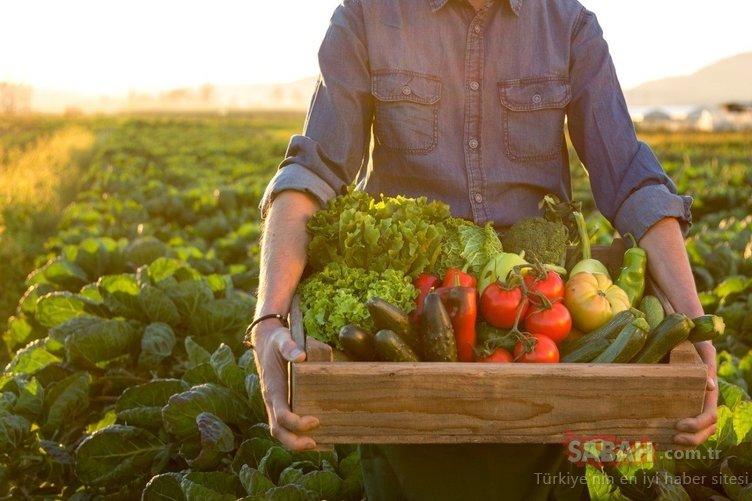 Bu gıda sindirim sistemini düzenliyor ve hemoroid sorununu bitiriyor!