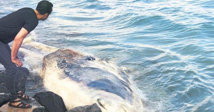 Ölü balina kıyıya vurdu