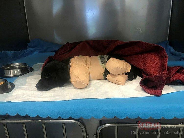 Sakarya'da bacakları kesilerek öldürülen yavru köpekle ilgili validen flaş açıklama