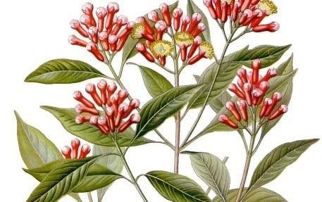 100'den fazla hastalığa iyi gelen bitki