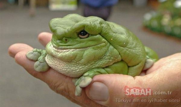 Daha önce görmediğiniz en garip canlılar