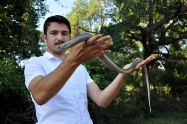 Yılan görünümlü kertenkele