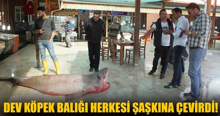 Mersin'de 4 metrelik dev köpek balığı görenleri şaşkına çevirdi!