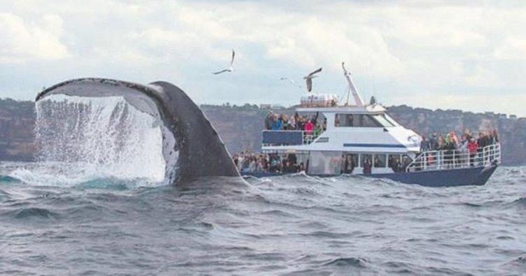 45 tonluk balina poz verdi