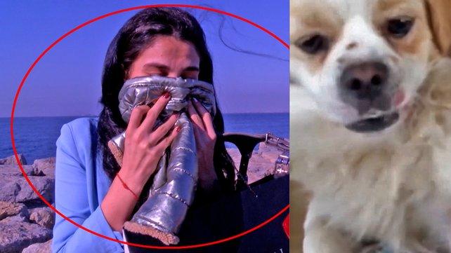 İstanbul Kadıköy'de köpeği kaybolan genç kadın köpeğinin kıyafetlerini koklayarak özlem gideriyor   Video
