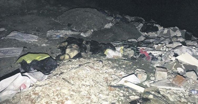 Başkentte yine köpek katliamı