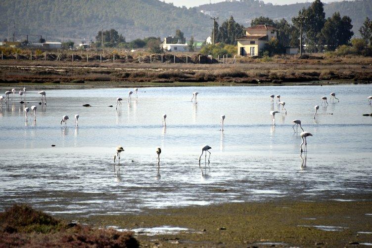 Flamingolar Bodrum'a gelmeye başladı