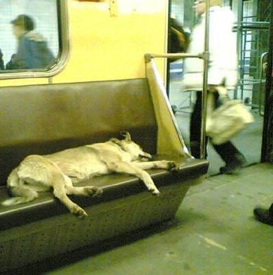 Dünya metrolarından inanılmaz kareler