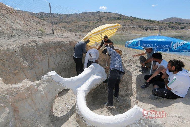 7,5 milyon yıllık! Kayseri'de bulundu, alçılanarak taşındı