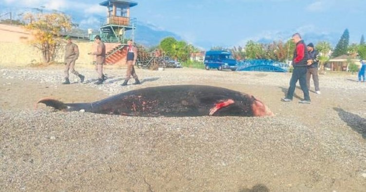 Kemer sahilinde ölü balina kıyıya vurdu