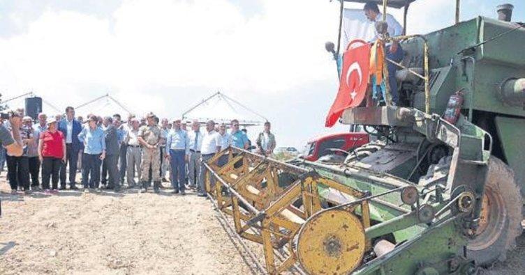 Hasanbeyli'de nohut hasadı