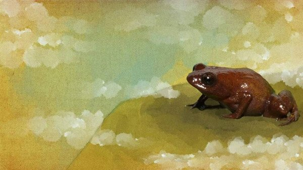 Amazon'da dokuz yeni tür keşfedildi