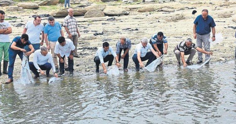 100 bin sazan yavrusu suya bırakıldı