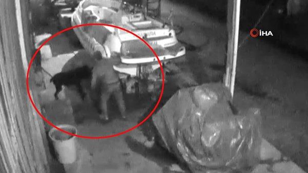 Marmaris'teki Pitbull dehşetinin görüntüleri ortaya çıktı! İşkence anları kamerada | Video
