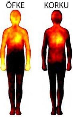 Duyguların bedensel haritası