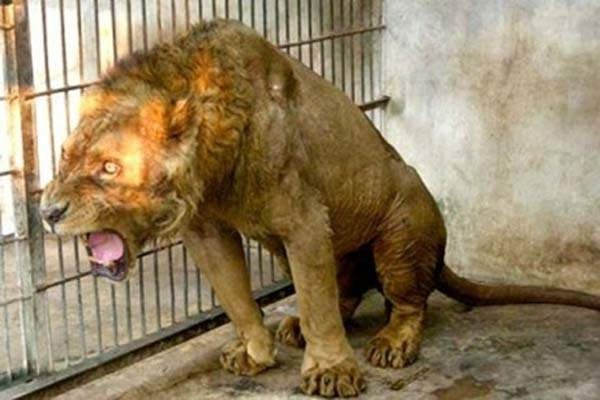 Hayvanat bahçesi mi, ölüm kampı mı?