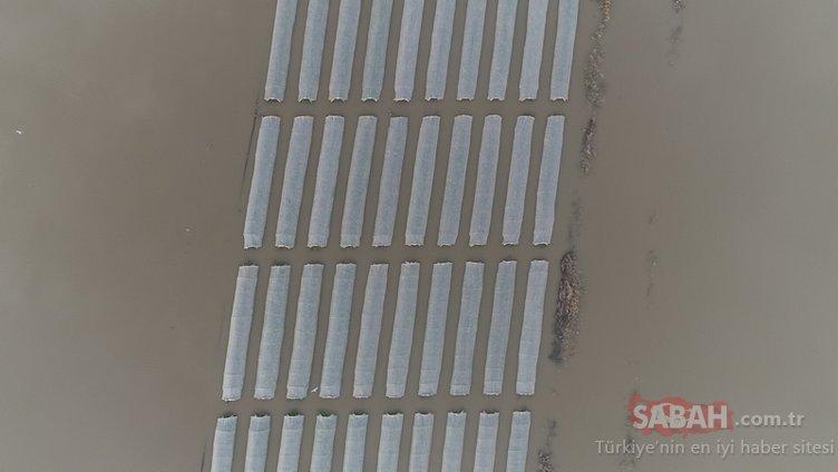 Mersin'deki tarlalar havadan böyle görüntülendi