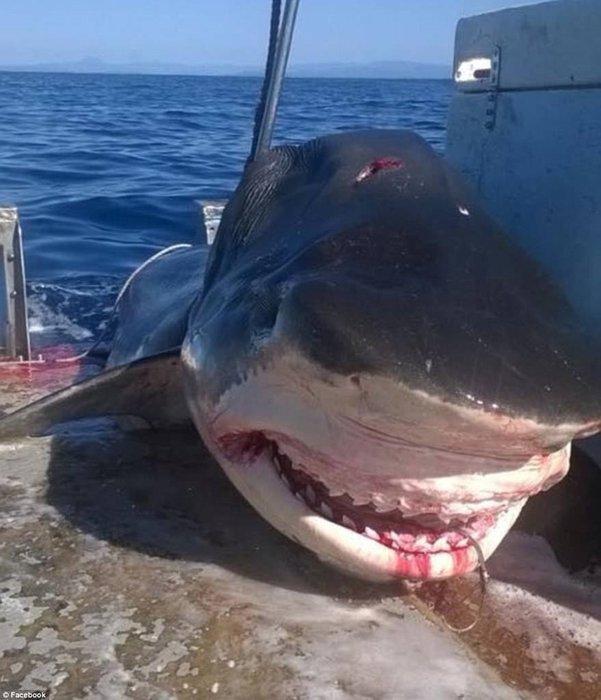 İşte köpekbalığı gerçeği