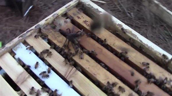 Örümceğin saldırısı pahalıya patladı!