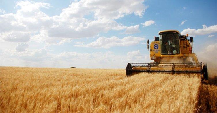 Buğdaydaki rekolte üreticiye çifte bayram yaşatıyor