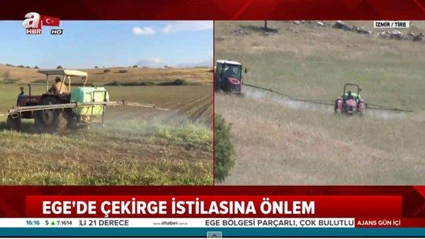 Çekirge İstilası Türkiye'ye Geldi!