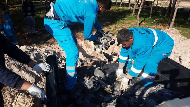 Şanlıurfa'da korkutan kuş ölümleri!