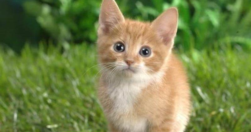 Kedilerde ağız kokusu neden olur? - Sağlık Haberleri