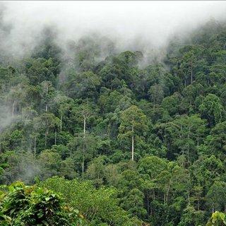 Amazonlar'da kuraklık öyle bir işe yarıyor ki...
