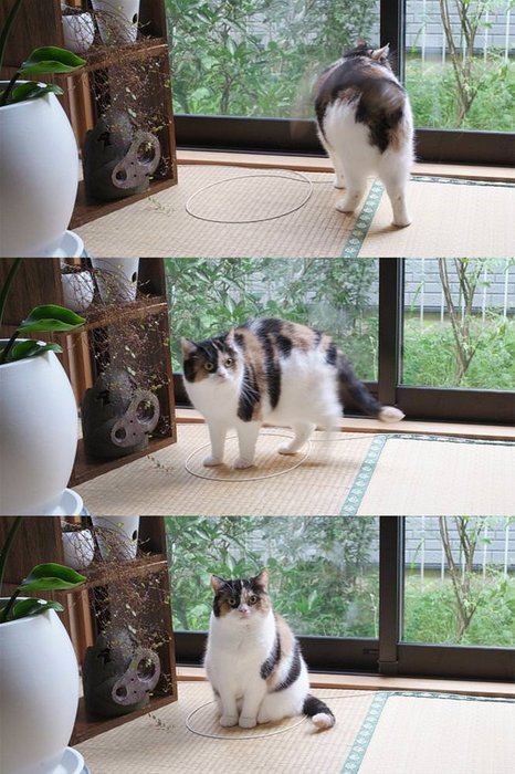Yeni trend: Kedi çemberi