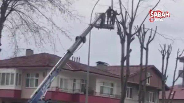 Ağaç budayan şahıs, vinç sepetinden atlayarak operatöre saldırdı | Video