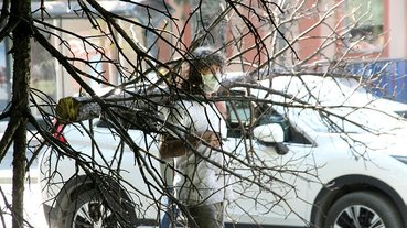 Profesörden dikkat çeken eylem: Yanmış ağacı sırtında taşıdı