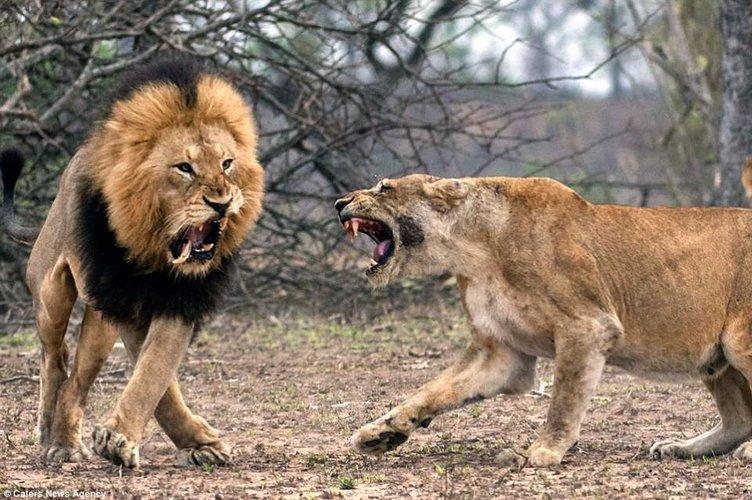 Vahşi doğada inanılmaz anlar