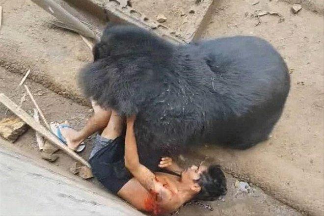 Hayvanlar aleminin unutulmaz saldırıları
