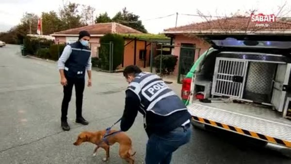 Skandal paylaşımların ardından gözaltına alındı, köpek barınağa teslim edildi | Video