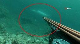 Çanakkale Boğazı'nda aniden zıpkıncının menziline giren yunus balığından şaşırtan hareket kamerada | Video