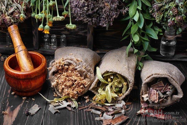 Şifa diye tüketiyoruz ama ölüme götürüyor! İşte yasaklanan zehirli bitkiler...