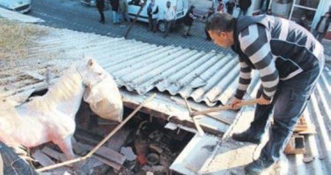 Başıboş gezen at çatıdan içeri düştü