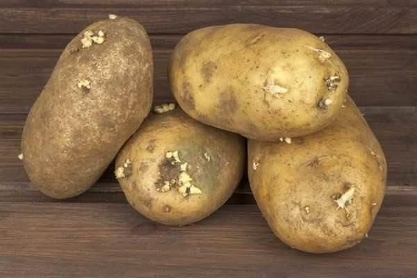 Patates hakkında ilk defa okuyacağınız 20 ilginç bilgi