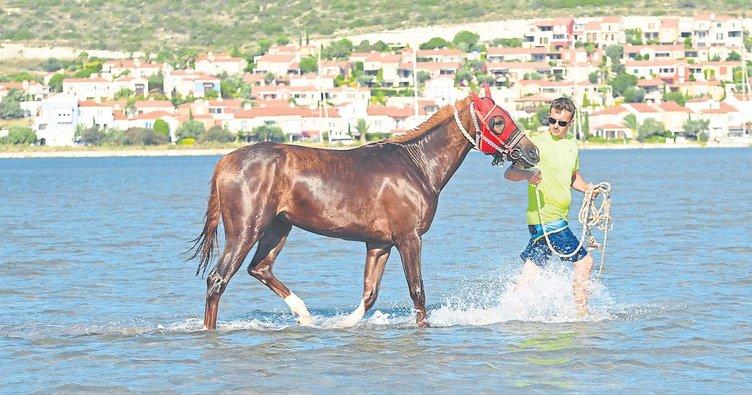 Sakat yarış atlarına denizde terapi