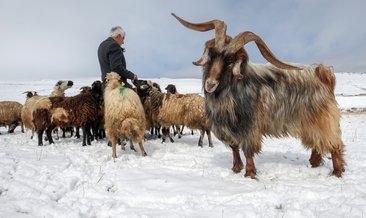 Yaylaya çıkmaya hazırlanan besiciye kar sürprizi