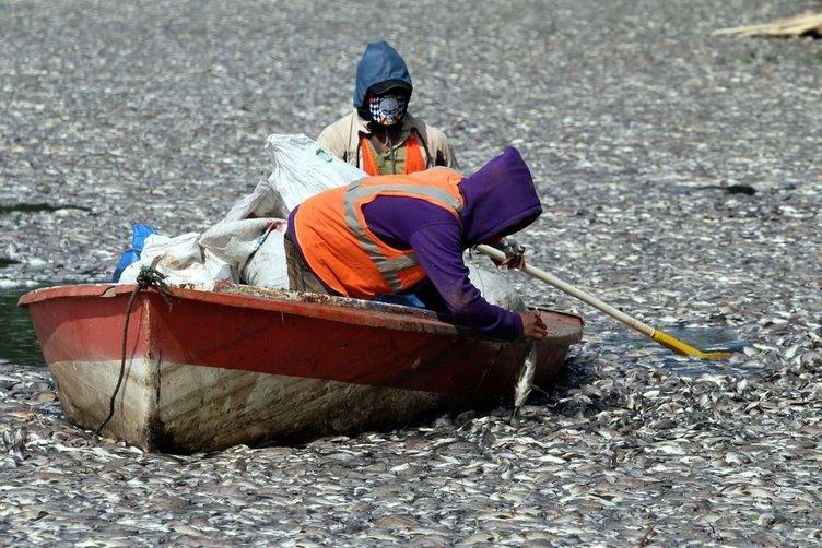Toplu balık ölümleri!