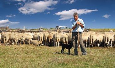 Rüyada çoban görmek ne anlama gelir?