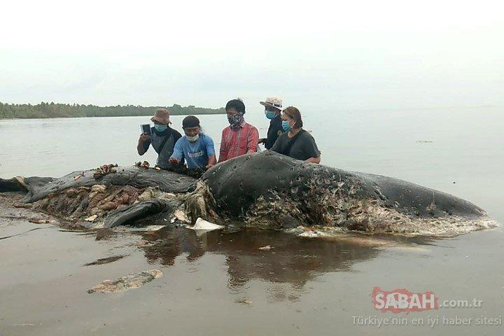 Ölü balinanın midesinden çıkanlar