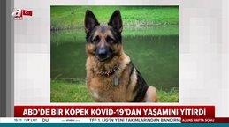 Son Dakika Haberi: İlk defa bir köpek koronavirüsten öldü! | Video