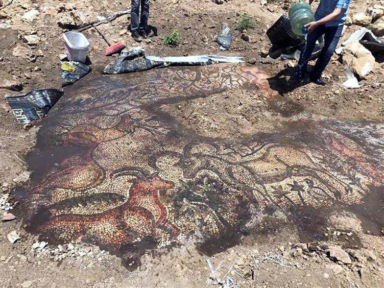 Çiftçilik yapan iki kardeş Roma mozaiği buldu