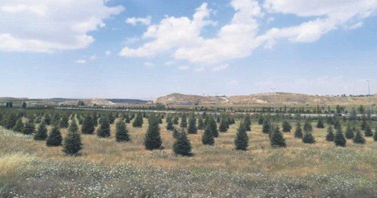 Basın ormanına 312 ağaç dikildi