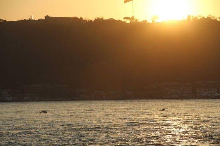 Yunuslar İstanbul Boğazı'nda şov yaptı