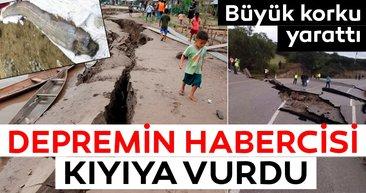 Büyük depremin habercisi karaya vurdu!