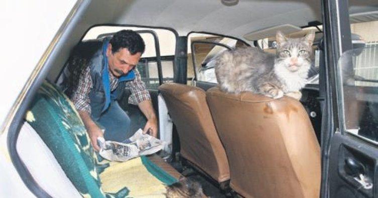 Satın aldığı arabayı kedilere yuva yaptı